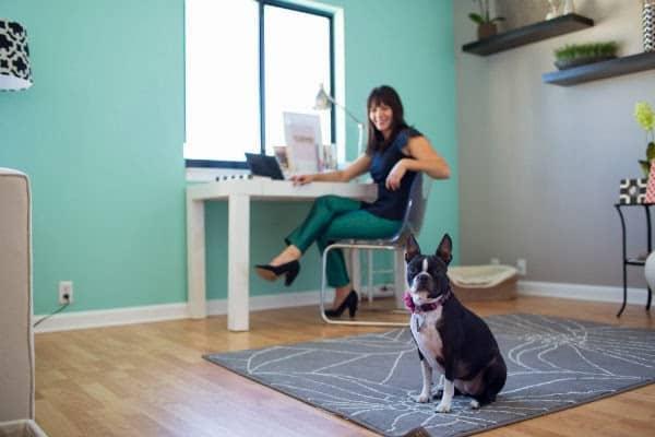 boston terrier, mint wall, office