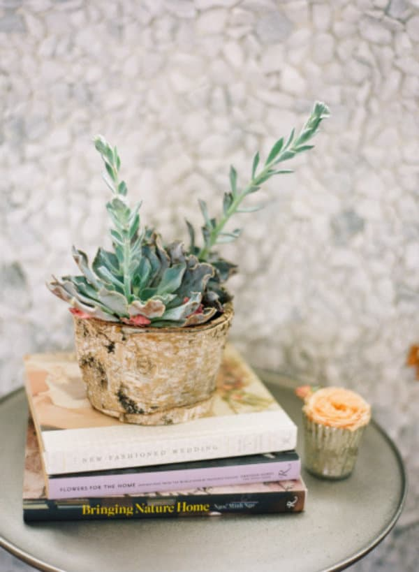 succulents for the home . via @mystylevita