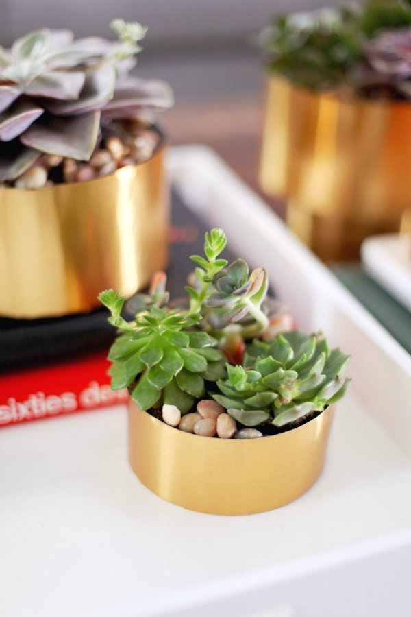 succulents for the home via @mystylevita