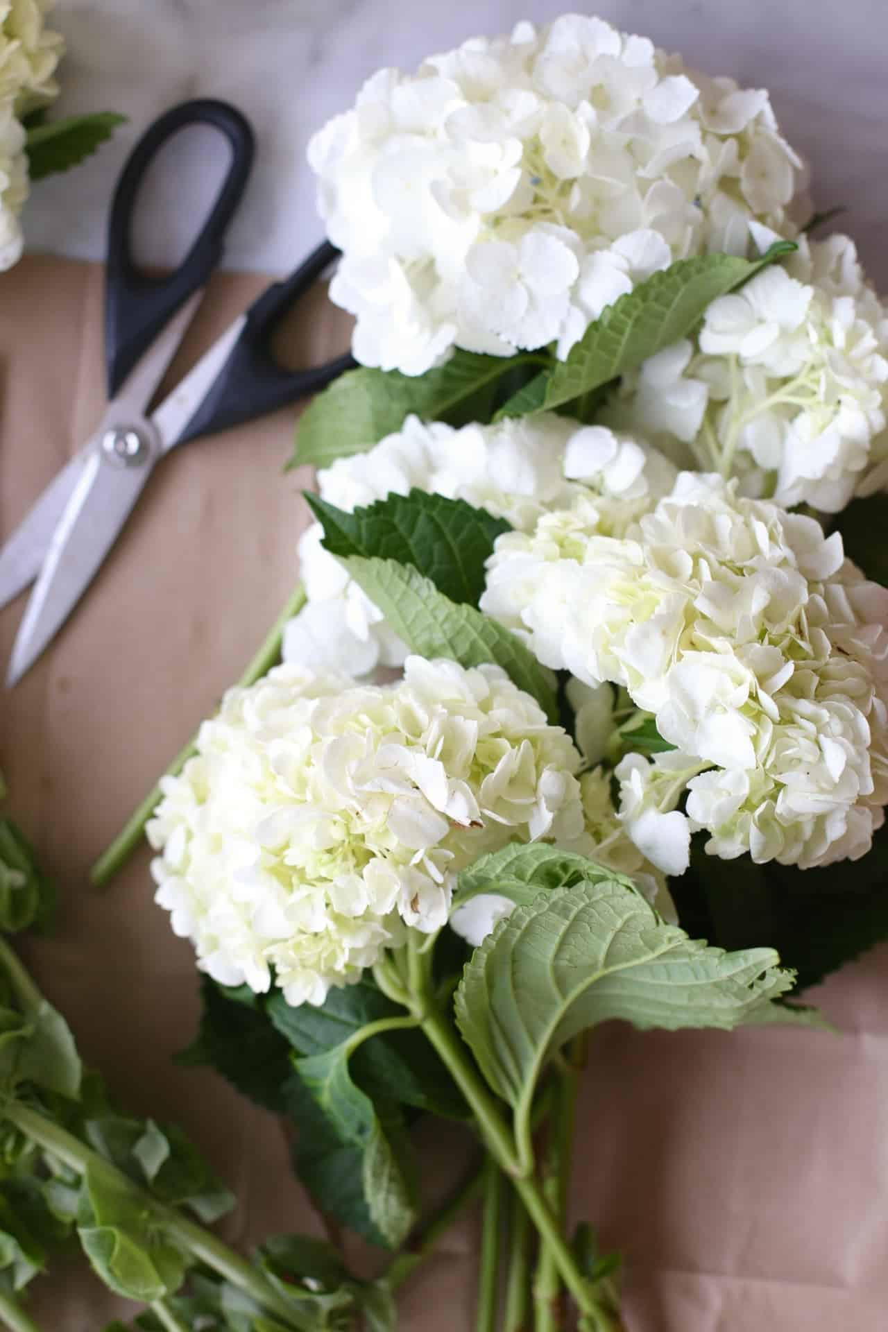 Hydrangea flower arrangement at home