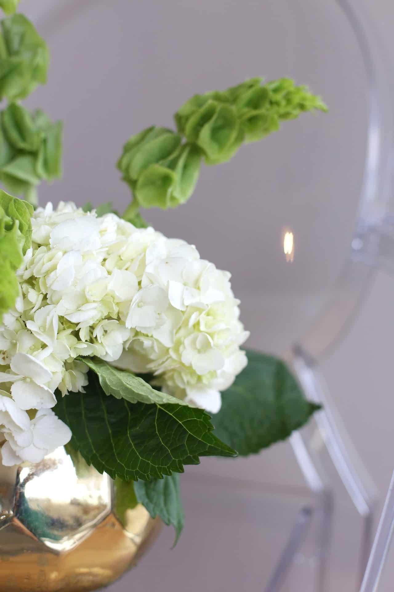 Hydrangea flower arrangement at home