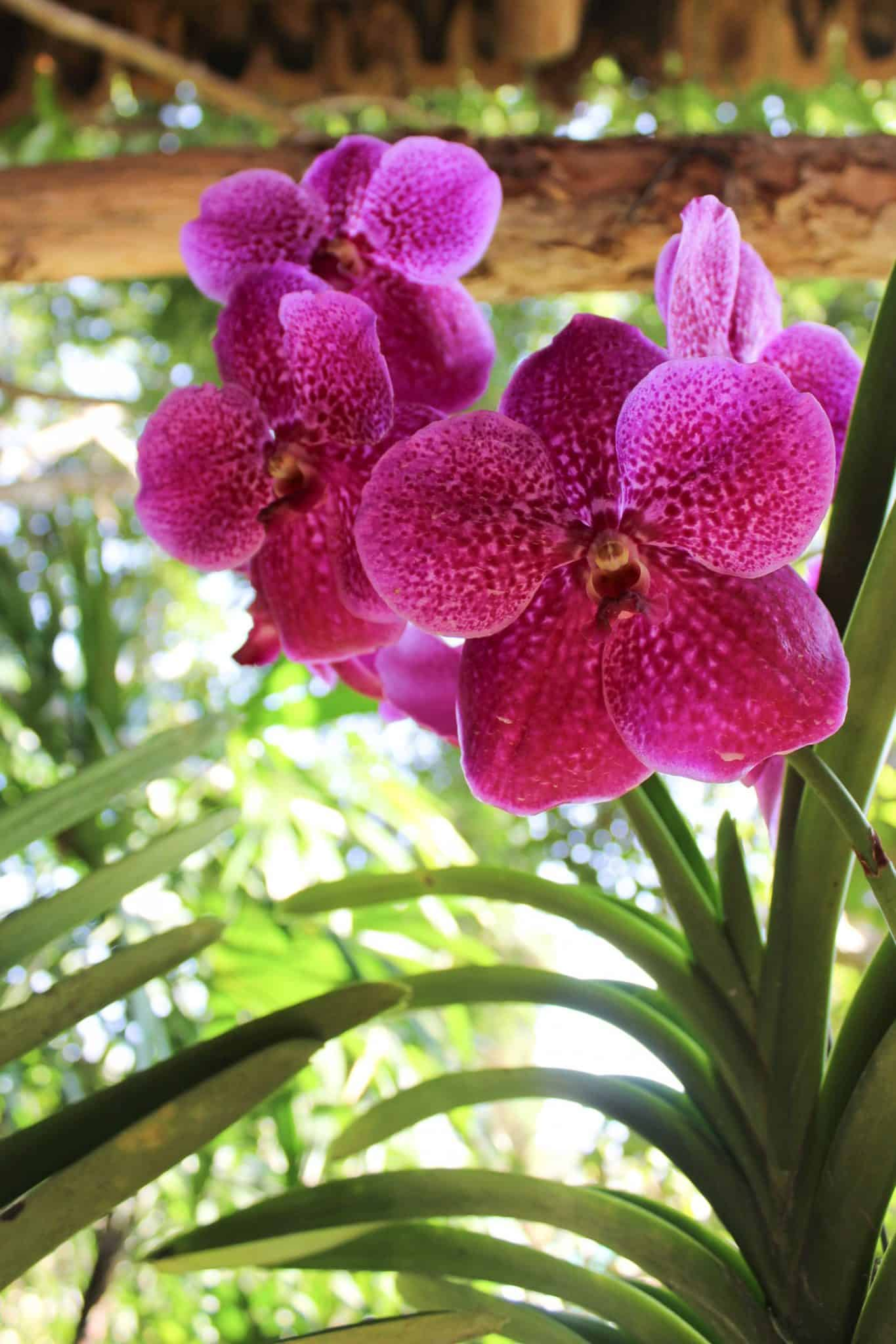 Chiang Mai Orchid Farm - Things to do in Thailand - A Thailand travel guide - My Style Vita @mystylevita