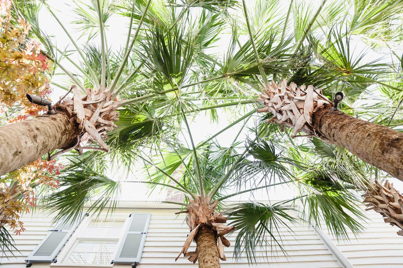 palm trees, charleston palm trees, where to stay in charleston
