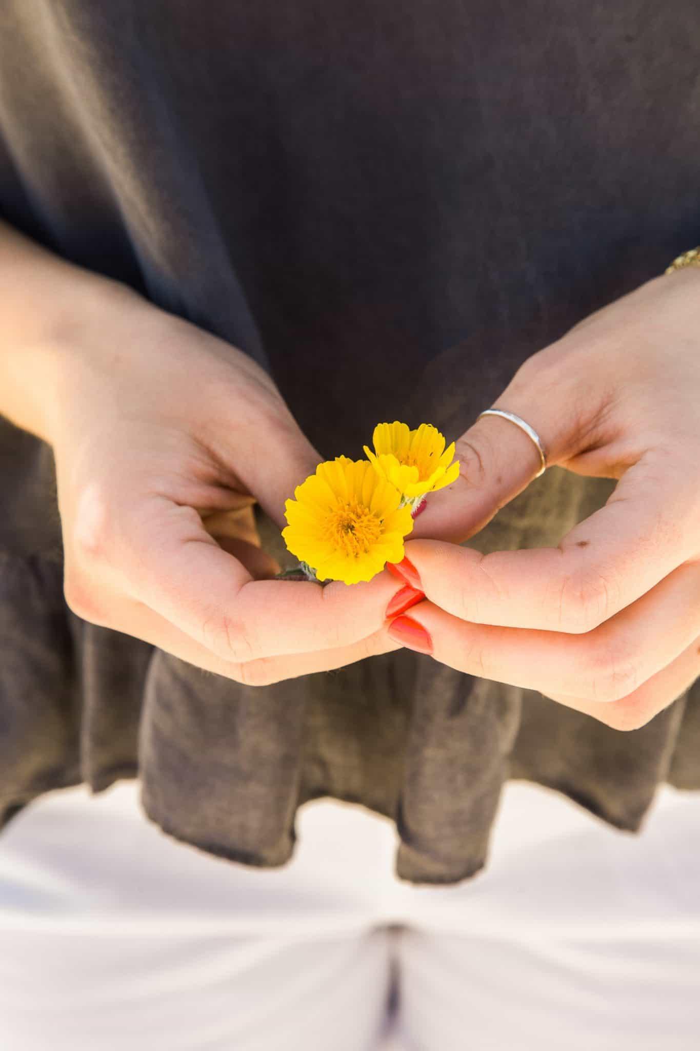 desert flower - yellow flowers - My Style Vita @mystylevita