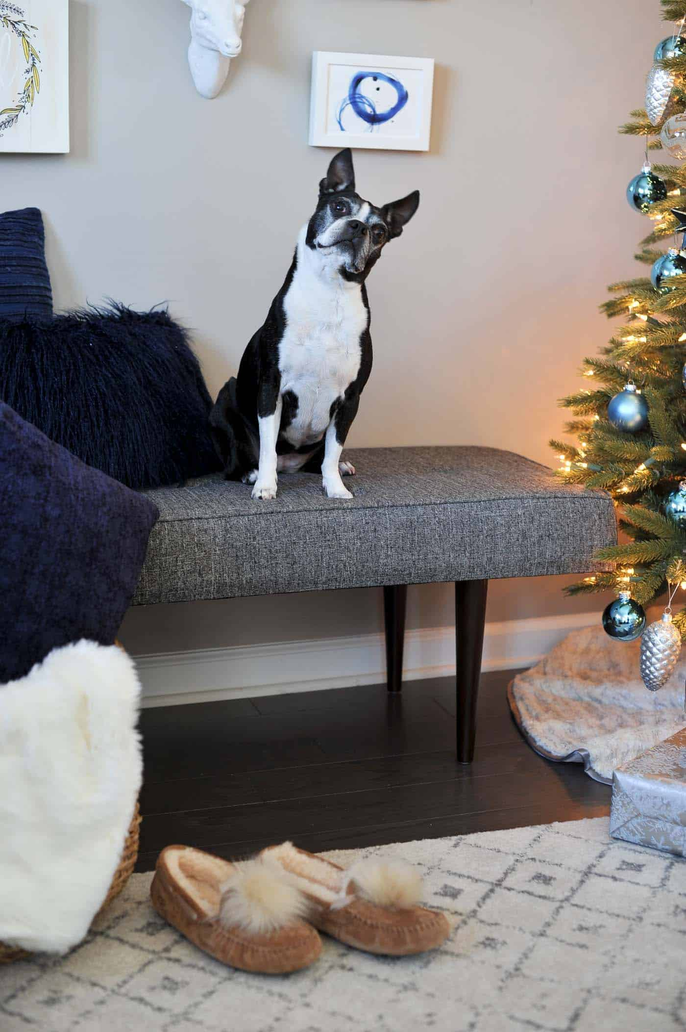 gifts for the dog lover, boston terrier - My Style Vita @mystylevita