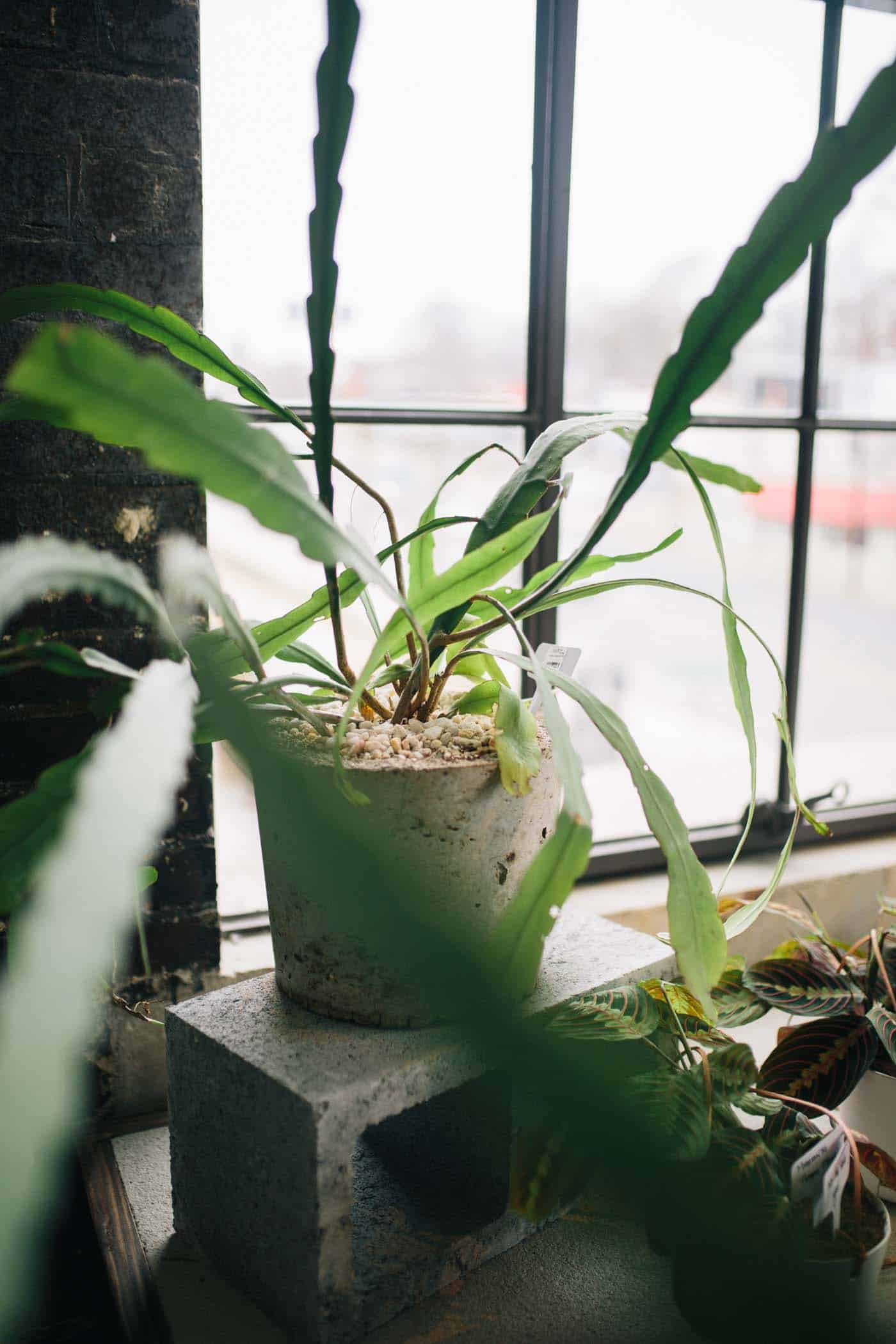 The Best Indoor Plants You Can Keep Alive - My Style Vita