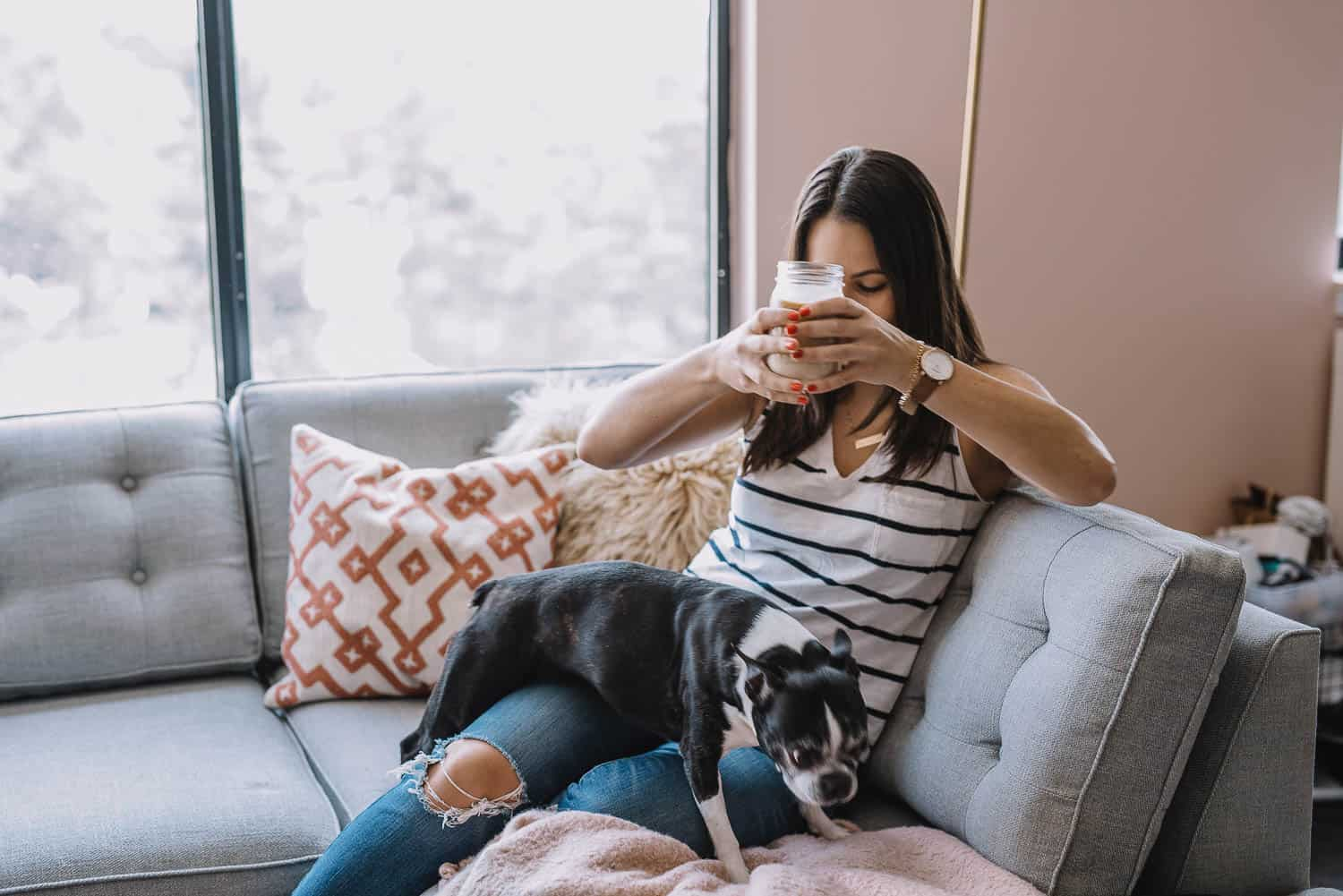 boston terrier, dog sitting on couch, best things to buy for a new dog - My Style Vita