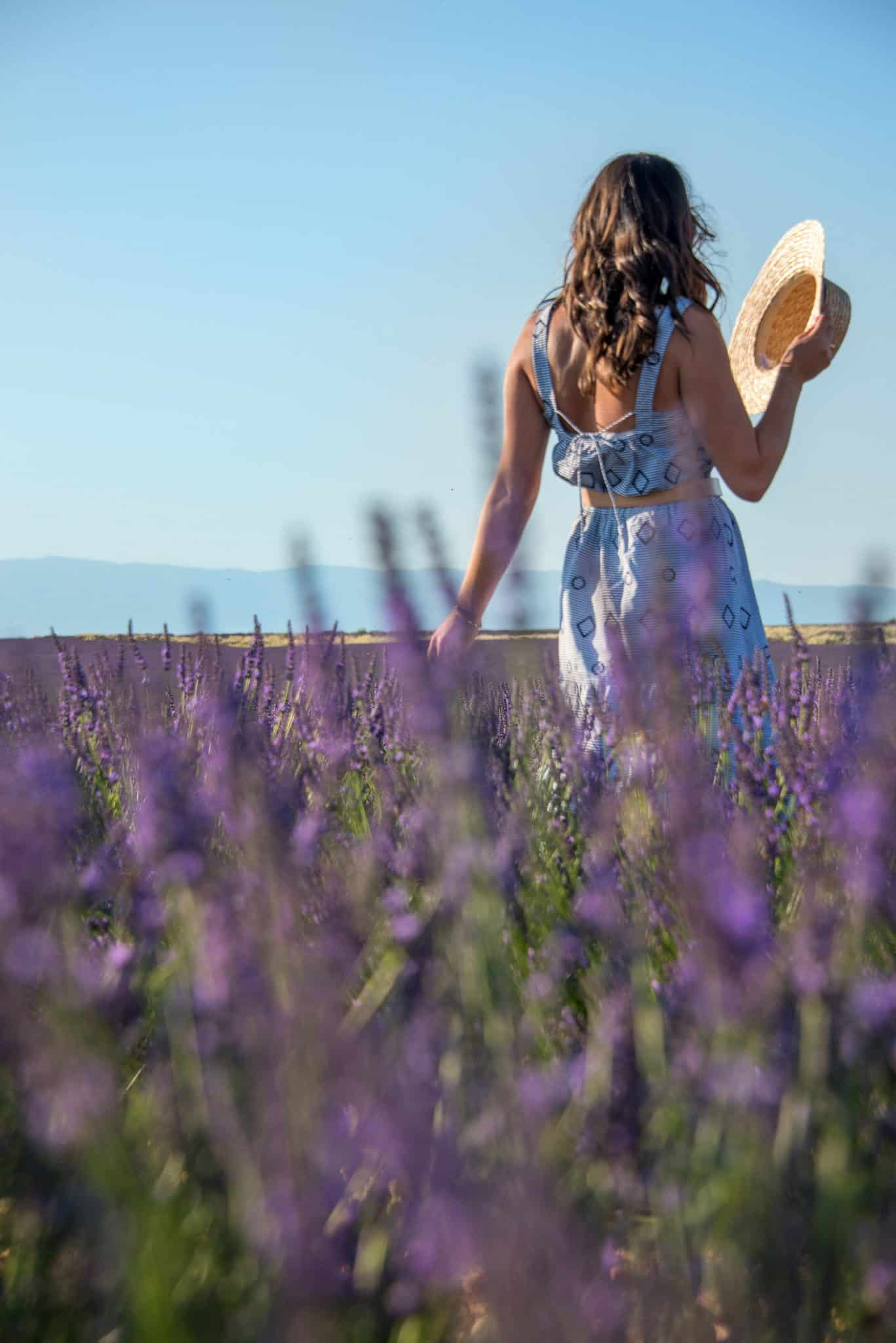 things to do in the South of France, lavender fields, provence - My Style Vita