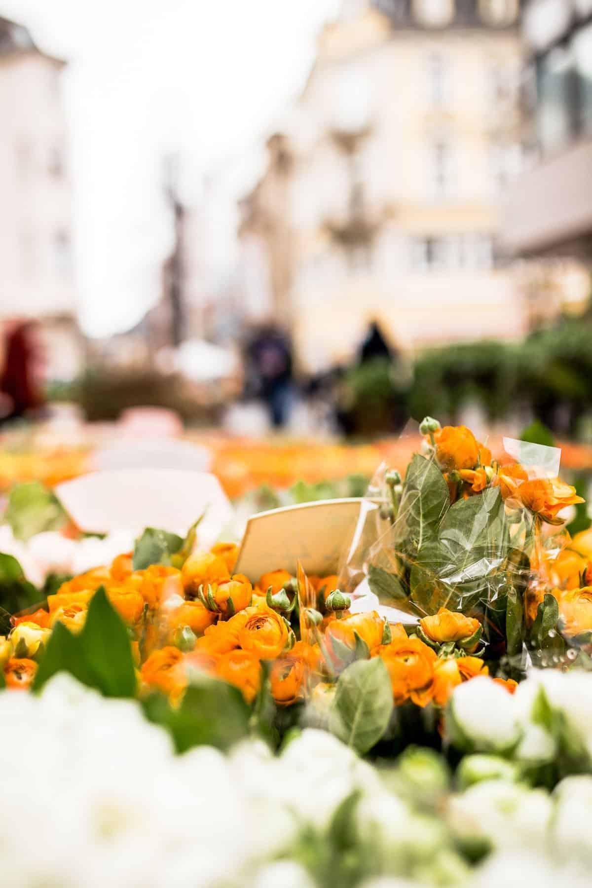 Bonn Flower Market
