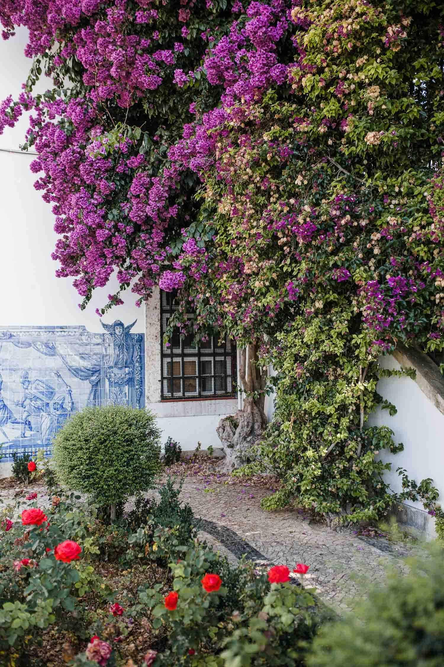 a purple flower tree in Portugal
