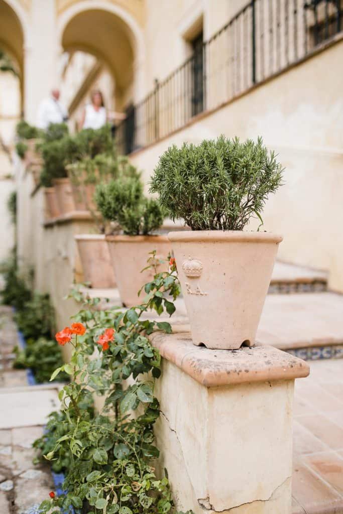flowers in Sevilla