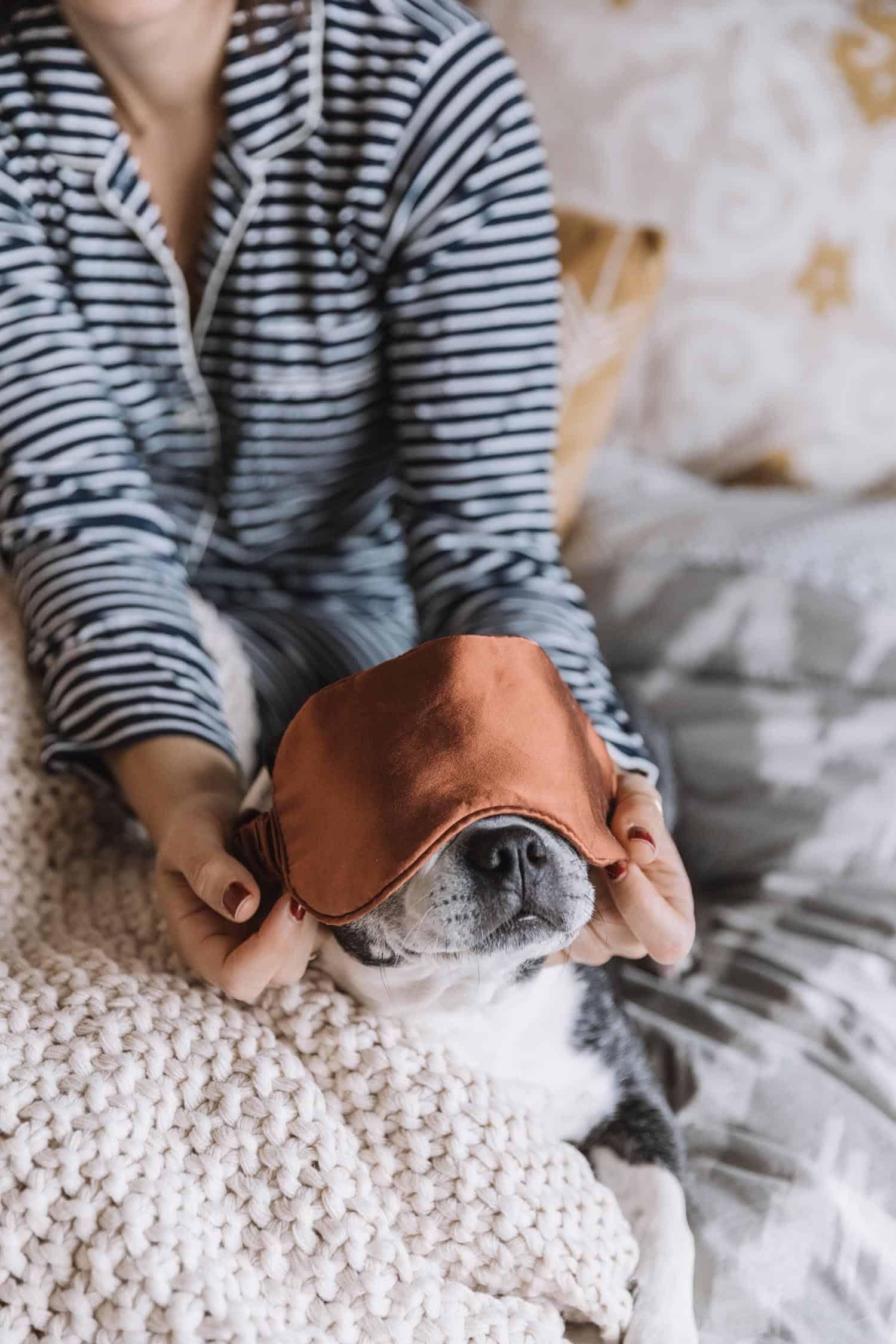 Boston terrier wearing an eyemask